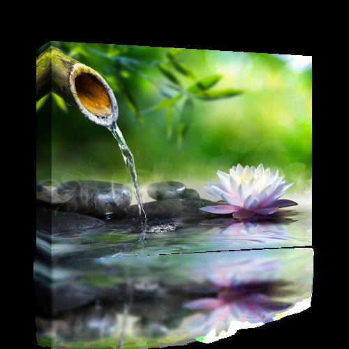 Zen Waterlily